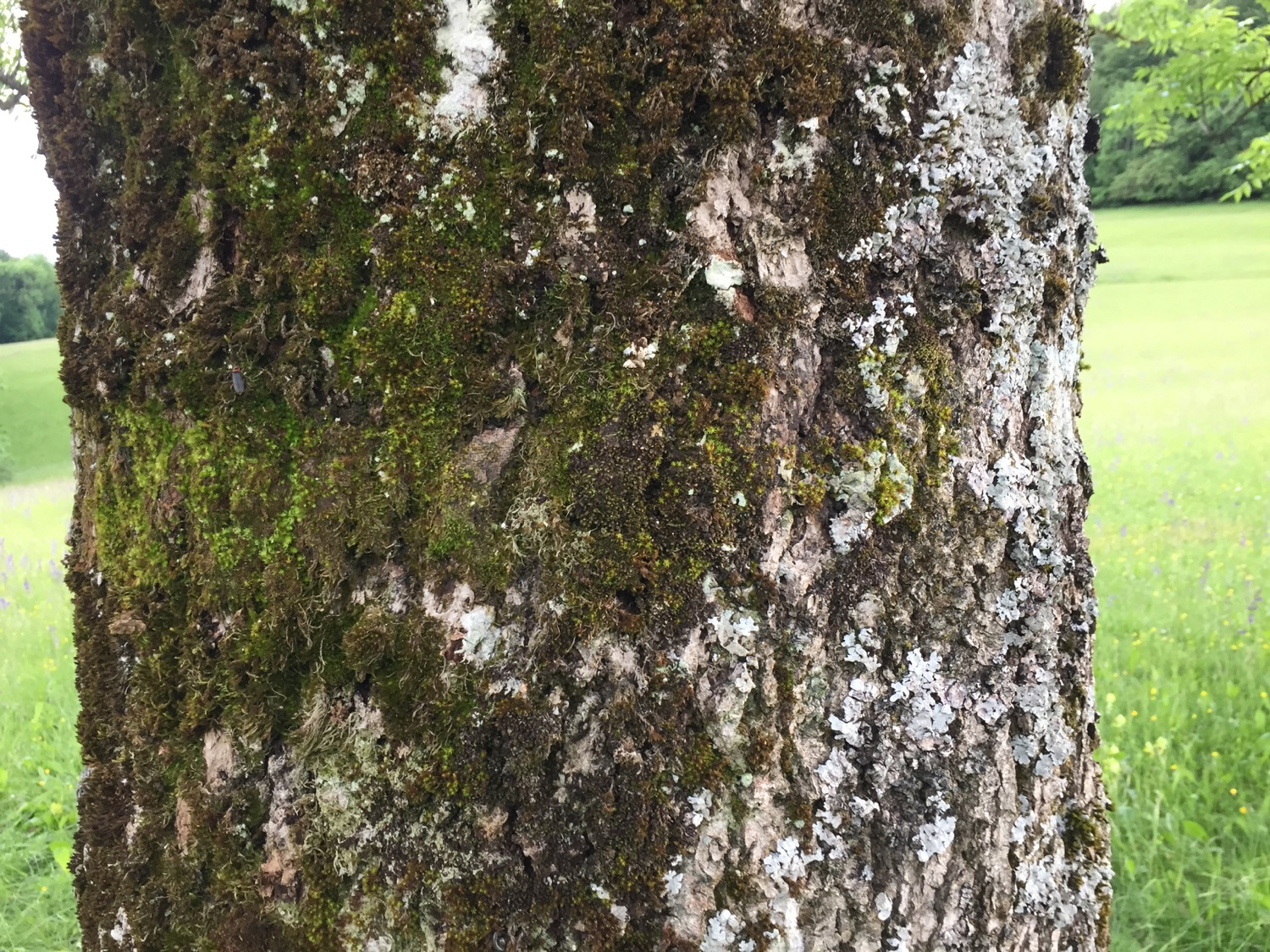 Results of TreePRO usage on a very soft and wet bark