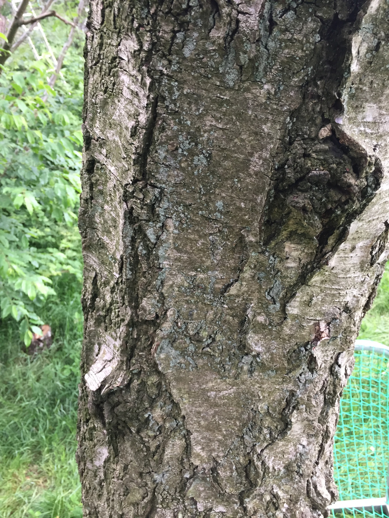 Results of 3 days continuous TreePRO usage on a very rough bark